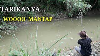 Download Video MANCING DI SARANG IKAN  GABUS MP3 3GP MP4