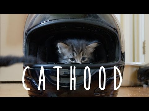 version - In 2014, the Pet Collective casted a six day old kitten. For the next twelve weeks, they made internet history. Based on a somewhat true story... kind of. Subscribe to The Pet Collective: http://bi...