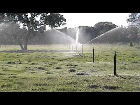 Irrigação tifton 85 manejo leiteiro.