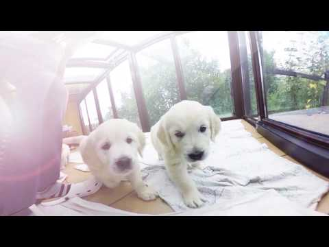 360 Golden Puppies - Virtual Dream video for oncology children