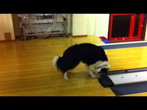 szalona-reakcja-psa-na-czujnik