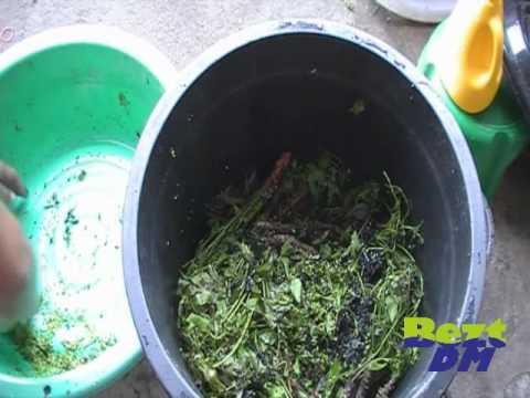 น้ำหมักสะเดาสูตรไล่แมลงด้วย BeztDM