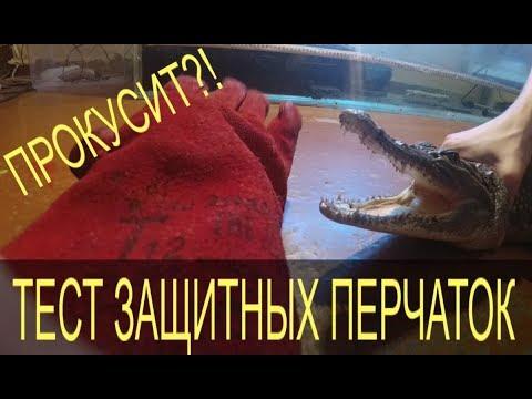 Тест защитной перчатки! Прокусит ли крокодил руку в защитной перчатке?!