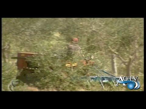Udienza rinviata aziende agricole fantasma