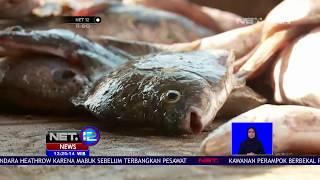 Video Penjualan Ikan Di Kawarang Menurun Pasca Jatohnya Pesawat Lion Air JT 610   NET12 MP3, 3GP, MP4, WEBM, AVI, FLV November 2018