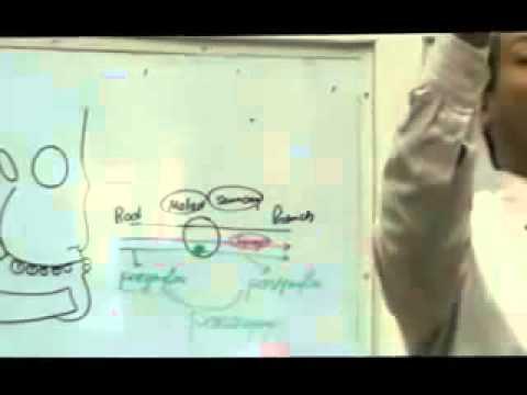 Dr Ahmed Galal Head 6