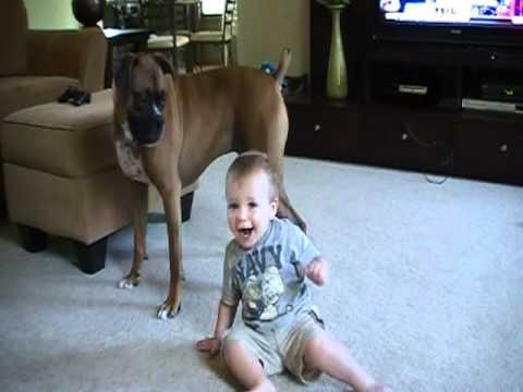 complicità amorevole e gioia tra un boxer e un bambino
