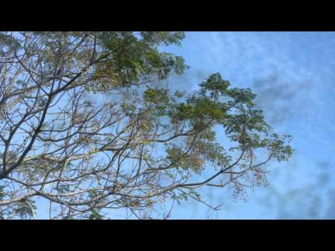 Kenny G (USA) - Sleigh Ride