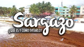 Video Sargassum, what is it and how to avoid it on your holidays MP3, 3GP, MP4, WEBM, AVI, FLV Juni 2019