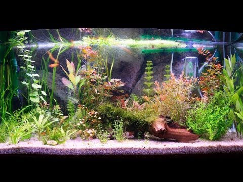 How to Clean a Fish Tank Filter | Aquarium Care