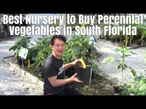 Best Nursery to Buy Perennial Vegetables & Fruit Trees in South Florida