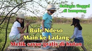 Video BULE NDESO MAINAN KE LADANG || WAKTUNYA METIK SAYUR GRATIS..! MP3, 3GP, MP4, WEBM, AVI, FLV April 2019
