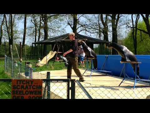 Seelöwenvorführung Elefantenhof Platschow / 2018 Teil1