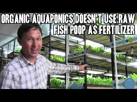 Urban Organics Aquaponics Doesn't Use Raw Fish Poop as Fertilizer