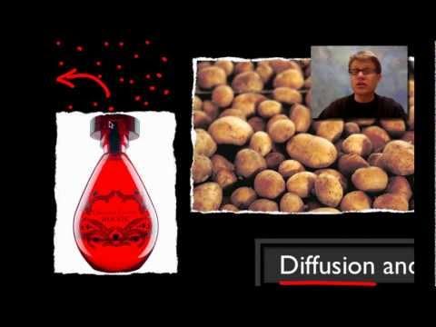 AP Biology Lab 1: Diffusion und Osmose