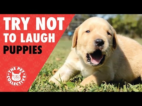 Cute and Funny Puppy Compilation
