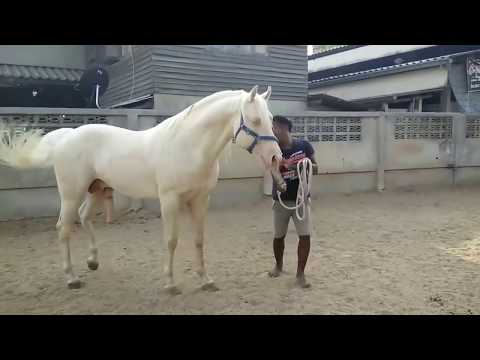 Video Horse Breeding Mating horse #3 download in MP3, 3GP, MP4, WEBM, AVI, FLV January 2017