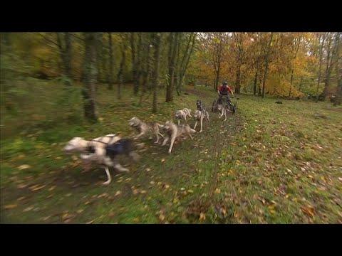Αγώνας με έλκηθρα και σκύλους στο Ηνωμένο Βασίλειο