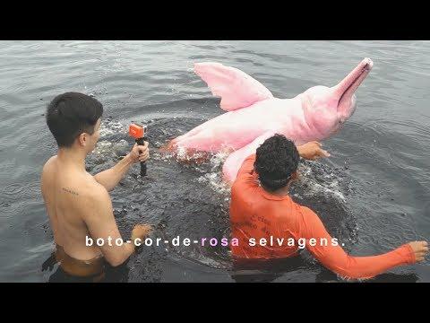 NADANDO COM O BOTO-COR-DE-ROSA + ENCONTRO DAS ÁGUAS! - Manaus