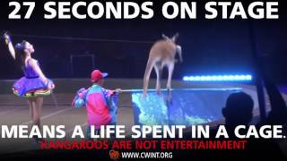 Kangaroos Don't Belong In The Circus