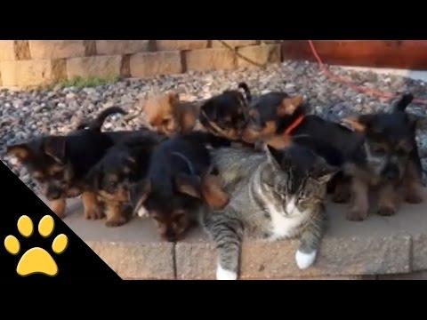 il gatto più paziente del mondo! non ci crederete!