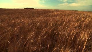 Norman Borlaug &  The Green Revolution