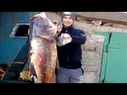 ловля толстолоба видео под водой