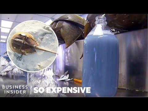 Why Horseshoe Crab Blood Is So Expensive | So Expensive