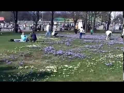 Прибыльное хобби (видео)