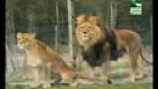 Videos Divertidos De Animal Planet
