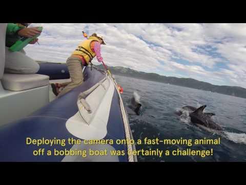 Wat spoken dolfijnen uit als wij ze niet kunnen zien