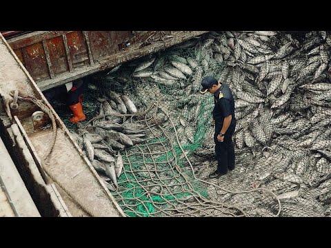 Ταϊλάνδη:Στοπ στο «ξέπλυμα ψαριών»