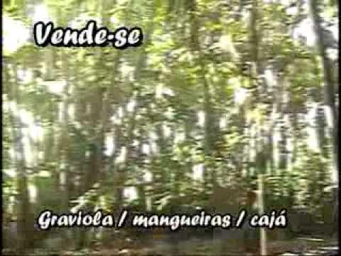 Vendo chacara São José em Cururupu