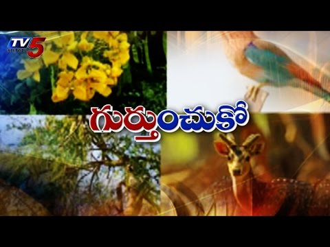 Official symbols of TS to reflect culture, heritage : TV5 News