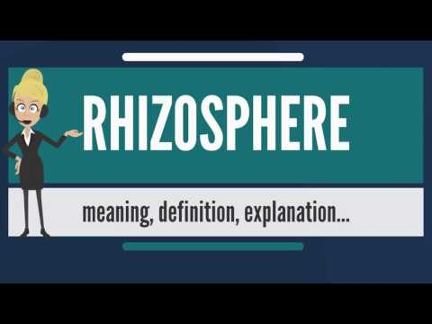 What is RHIZOSPHERE? What does RHIZOSPHERE mean? RHIZOSPHERE meaning, definition & explanation