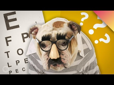 Why Don't Other Animals Wear Glasses?
