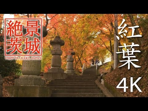 【絶景茨城】紅葉[4K]|VISIT IBARAKI, JAPAN