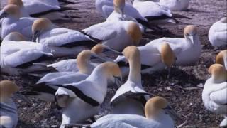 Wildlife vida salvaje corto video de prueba