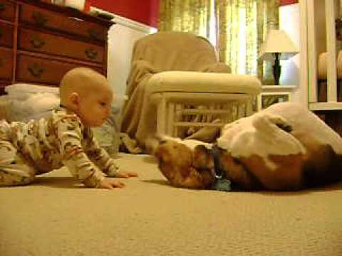 Beagle Meets the Baby