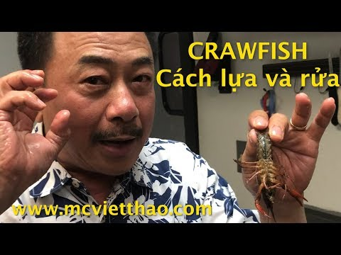 Cách Lựa và rửa CRAWFISH ở BOILING CRAWFISH Jacksonville Florida- MC VIỆT THẢO- Mar 9, 2019 - Thời lượng: 4 phút, 6 giây.