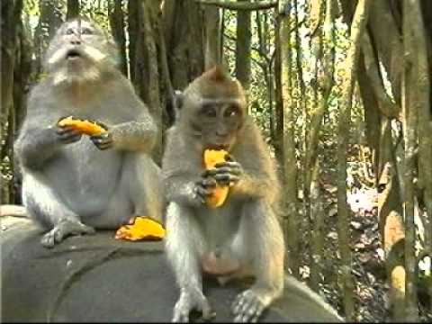 Disproporcija - dainelė apie beždžionę