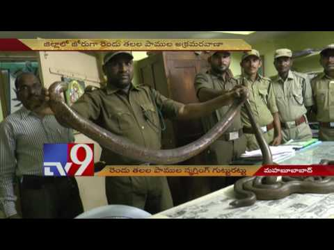 2 Headed Snake smuggling racket busted