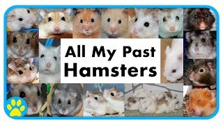 All My Past Hamsters | 7 Years On YouTube Best Bits & Emotional Moments by ErinsAnimals