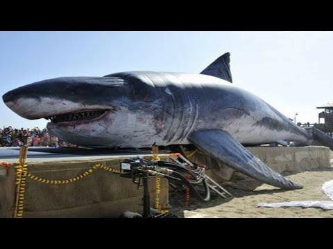 il megalodonte - lo squalo gigantesco