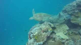 Heron Island Australia  City new picture : Heron Island Australia 2015