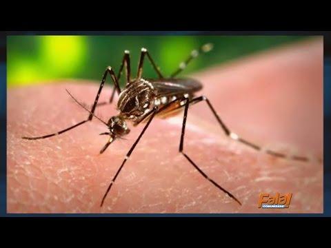 Projeto ZikaLab é realizado em Araguaína para capacitar profissionais da saúde sobre a zika vírus
