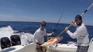 Lucaya Bahamas  city photos : Yellowfin Tuna fishing, Port Lucaya Bahamas, Cached Out April 2016