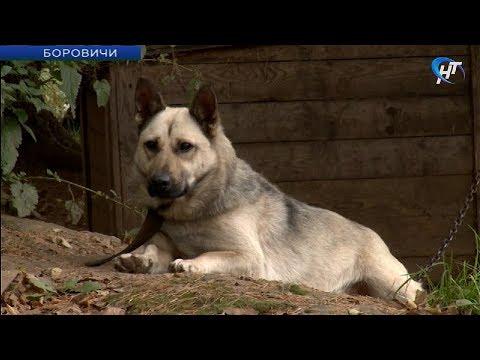 Боровичский приют для животных «Найда» стал частью проекта АСИ и Google «Вдали от столиц»