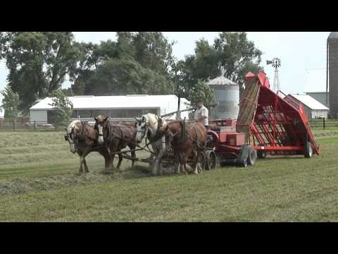 Baling Hay With Horses and Kuhns Mfg 1534 Hay Accumulator