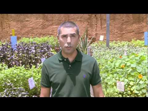Faça um repelente caseiro contra pragas do jardim